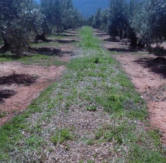 """La Asociación de Producción Integrada con DO """"Sierra de Segura"""" cuenta ya con 122 agricultores y 1800 hectáreas"""