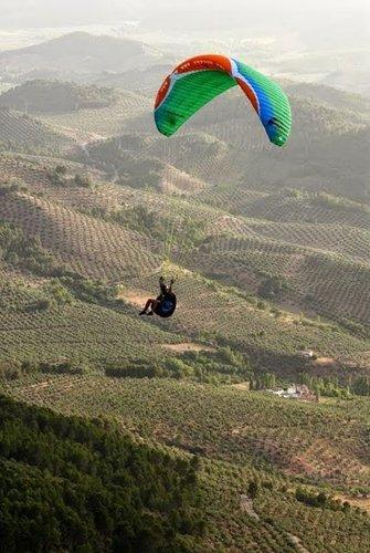 """La Denominación de Origen """"Sierra de Segura"""" promocionará el aceite de oliva de calidad en """"Música en Segura"""" y el Festival del Aire """"El Yelmo"""""""