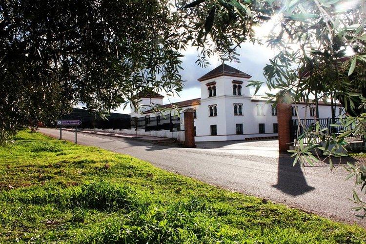 """La cooperativa """"Sierra de Génave"""" obtiene el 95% de aceite de oliva virgen extra en la campaña 14/15"""