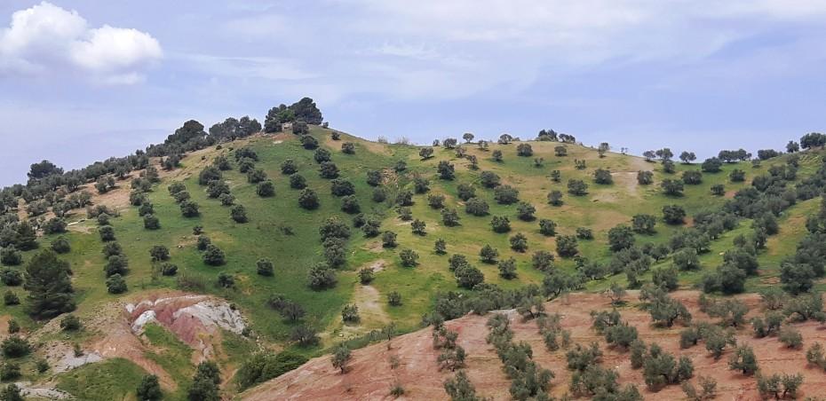 La Denominación de Origen Sierra de Segura se forma para la nueva campaña oleícola