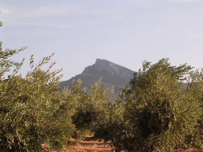 """La DO """"Sierra de Segura"""" prevé una producción de 8.000 toneladas de aceite de oliva en la campaña 14/15"""
